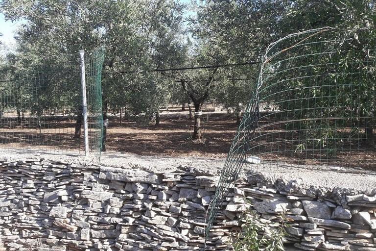 Una rete di recinzione tagliata