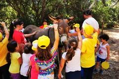 Campo estivo per bambini disabili di Macaranga, fra inclusione ed entusiasmo