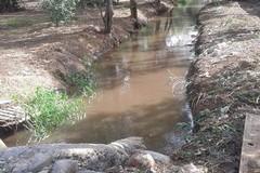 WWF: le acque reflue di Ruvo e Terlizzi stanno uccidendo uccelli e alberi a Molfetta