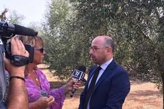 Calamità, Damascelli: «Anche Bari accederà a benefici per danni da gelata»