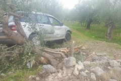 Incidente sulla Corato-Ruvo, auto travolge albero di ulivo
