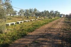 I ladri rubano le sue api: sparite 31 arnie e 11 sciami