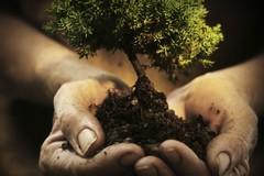 A Ruvo di Puglia un albero per ogni persona nata