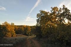 Una camminata per scoprire le querce di Ruvo