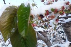 Maltempo, neve sulla Murgia. Persiste l'allerta anche su Ruvo