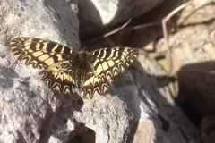 Lo studio delle farfalle per capire meglio l'ambiente