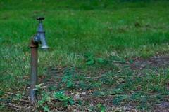 Aumento temperature fino a 40 gradi, Coldiretti: «Allarme siccità in Puglia»