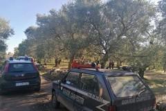 Ladri di olive sorpresi dalle Guardie Campestri, fermato un 68enne