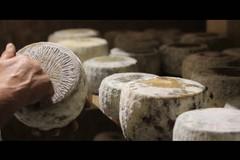 """Cheese 2019: sulla Murgia è nata una """"stella"""". Il battesimo del Capriccio di capra murgiano"""