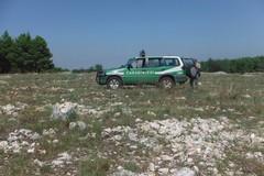 Pascolo trasformato in terreno agricolo nel Parco, in azione i Forestali di Ruvo di Puglia