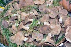 """La """"Sagra del Fungo Cardoncello"""" nelle pagine della rivista Il Giornale dell'Arte"""