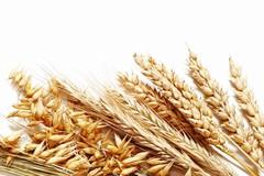 Consumi: è boom di pasta made in Italy proveniente da grani antichi