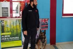 Cani antidroga al liceo scientifico, nessuna anomalia