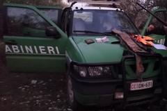 Caccia illegale al cingiale nel Parco, due denunce. Sequestrate armi e munizioni