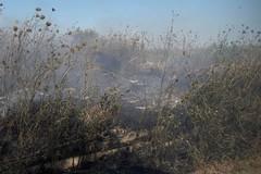 Incendio nelle campagne di Ruvo di Puglia