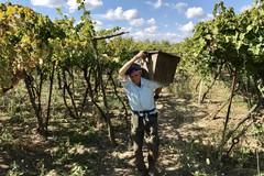 """""""In vino veritas"""", la nuova web serie di Michele Pinto. IL TRAILER"""
