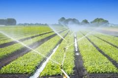 Aziende agricole, nuove opportunità dal GAL Murgia Più