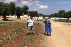 Agricoltura sociale in Puglia, dall'agrididattica e all'orto dei nonni