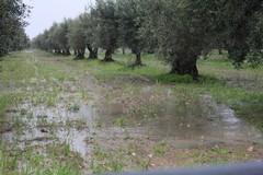 Sicurezza nelle campagne: «Urge un incontro con il Ministro degli Interni e dell'Agricoltura»