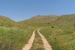 A piedi, a cavallo o in bici, 8 itinerari di Puglia fra ulivi e Alta Murgia