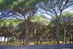 A Ruvo nasce EcoSistema, una rete per prendersi cura del verde cittadino