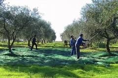 Banca della terra di Puglia, al via l'elenco dei terreni agricoli disponibili