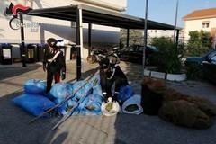 Furti di olive a Ruvo: 3 arresti e 500 chili di refurtiva recuperata