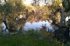 Problemi al depuratore consortile di Ruvo, acque reflue nell'agro di Molfetta