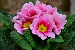 """""""Un fiore per la vita"""", a Ruvo vendita benefica per mamme in attesa in difficoltà"""