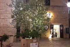 A Ruvo di Puglia l'albero di Natale è un ulivo