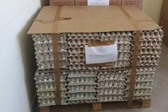Sequestro di uova in una società agricola di Ruvo di Puglia