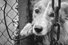 Violenza sugli animali, a Palazzo Caputi un incontro di studio