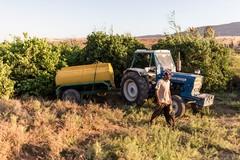 Incidente nelle campagne ruvesi, muore un agricoltore