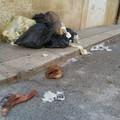 Zozzoni in trasferta a Bitonto: beccati sei sporcaccioni ruvesi