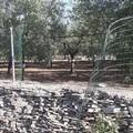 Escalation di furti nel bosco di Ruvo, prese di mira villette e depositi agricoli