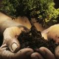 Alberi di olivi e limoni nelle scuole per la Giornata dell'Albero