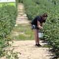 Il PSR Puglia delude i giovani imprenditori pugliesi