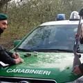 Caccia con mezzi non consentiti suĺla Murgia, una denuncia