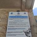 Ruvo di Puglia, città amica dei gatti