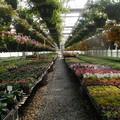 Floricoltori in ginocchio, CIA Levante «Necessaria riorganizzazione delle attività»