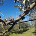 Gelata di febbraio, anche Ruvo di Puglia tra le zone danneggiate