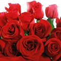 S. Valentino, il significato dei fiori