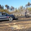 Incendio Acquatetta, individuato il presunto responsabile dai forestali di Ruvo di Puglia