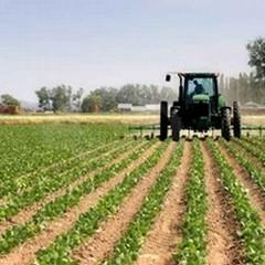 Sviluppo Rurale, pubblicato il secondo avviso pubblico dedicato agli investimenti materiali e immateriali delle imprese agricole