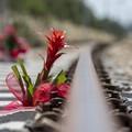 Quattro anni dal disastro ferroviario del 12 luglio 2016
