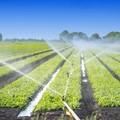 Ricerca Aforisma-Cia: le aziende pugliesi più longeve sono agricole