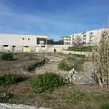 La denuncia di Piero Paparella: «Impianto di fitodepurazione completamente abbandonato»