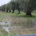 Piogge forti e bombe d'acqua: gli agricoltori sono in ginocchio