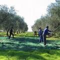 L'afa non ferma i ladri nelle campagne: furti di cavi nei quadri elettrici