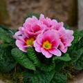 """""""Un fiore per la vita """", a Ruvo vendita benefica per mamme in attesa in difficoltà"""